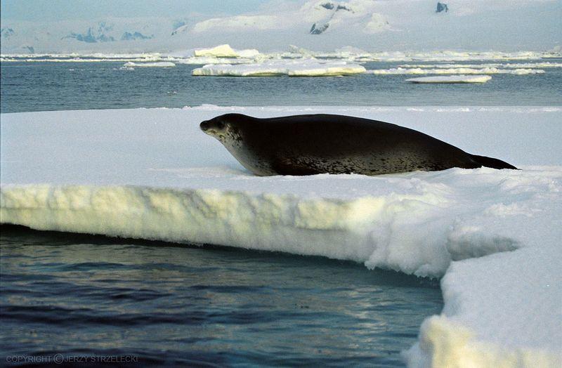 Antarctic_(js)_8