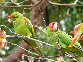 """Photo, """"Who's a pretty parrot?"""" by Jef Poskanzer. Creative Commons Attribution 2.0 Generic."""