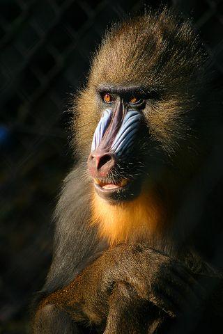 Photo: Malene Thyssen. GNU Free Documentation License.