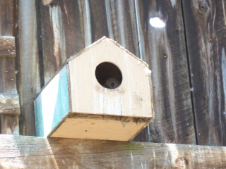 Photo: Susan McCarthy. Surveillance by brave owlet.
