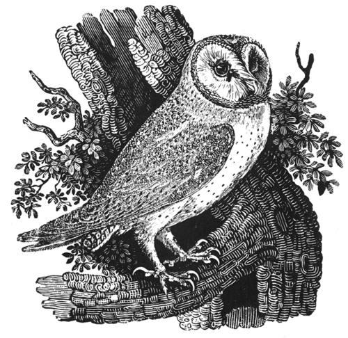 Print: Thomas Bewick. That tree is a deathtrap.
