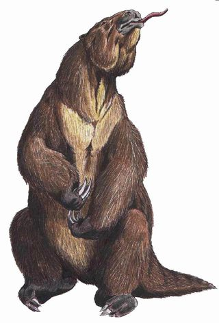 Image: ДиБгд. Public domain. Megatherium, the ground sloth, thinking about your peonies.