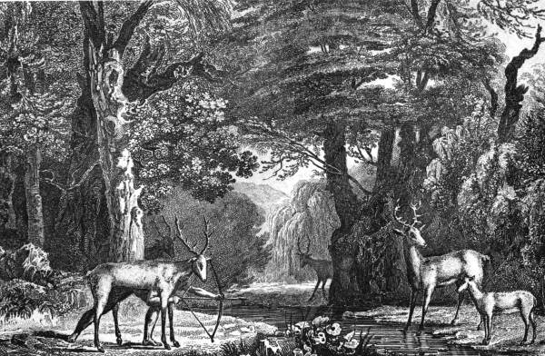 Jacques Le Moyne, Florida Photographic Collection. Those deer have a funny feeling something's not right. But what could it be?