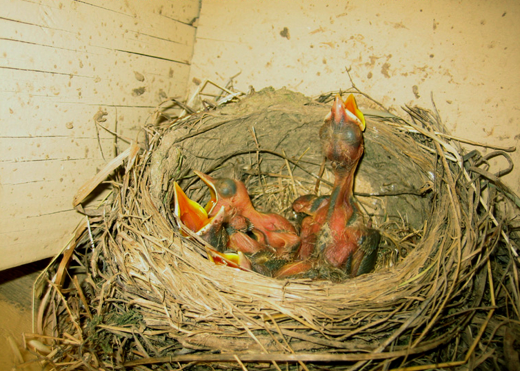 Baby Sparrow Fell Out Of Nest