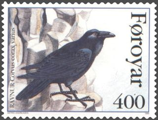 "Image: Astrid Andreasen. Public domain. Raven is ""ravnur"" in Faroese. The black and white pied ravens of the Faeroes were shot out and no longer exist."